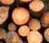 Lumber Database Directory